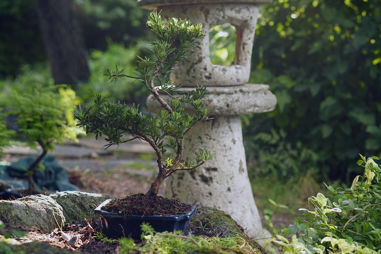 Japán kert - Bonsai Hungary