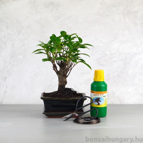 Bonsai ajándékcsomag - Ficus retusa