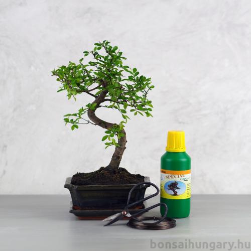 Bonsai ajándékcsomag - Ulmus parvifolia