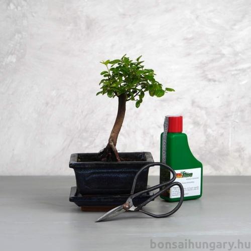 Bonsai ajándékcsomag - Sagaretia