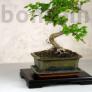 Kép 3/4 - Bonsai asztal - fekete