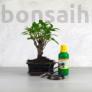 Kép 1/7 - Bonsai ajándékcsomag - Ficus retusa