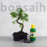 Kép 1/7 - Bonsai ajándékcsomag - Ulmus parvifolia