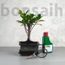 Kép 1/6 - Bonsai ajándékcsomag - Ficus retusa