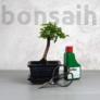 Kép 1/6 - Bonsai ajándékcsomag - Sagaretia