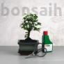 Kép 1/6 - Bonsai ajándékcsomag - Ulmus parvifolia