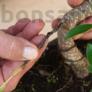 Kép 2/2 - Bonsai drót - többféle méret