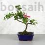 Kép 1/4 - Rhododendron (Azálea) - hajlított törzsű, 15 cm