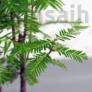 Kép 4/4 - Metasequoia (Mamutfenyő) bonsai, lomb