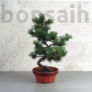 Kép 1/3 - Pinus parviflora (Japán selyemfenyő) bonsai