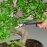 Kép 2/3 - Bonsai ágmetsző olló